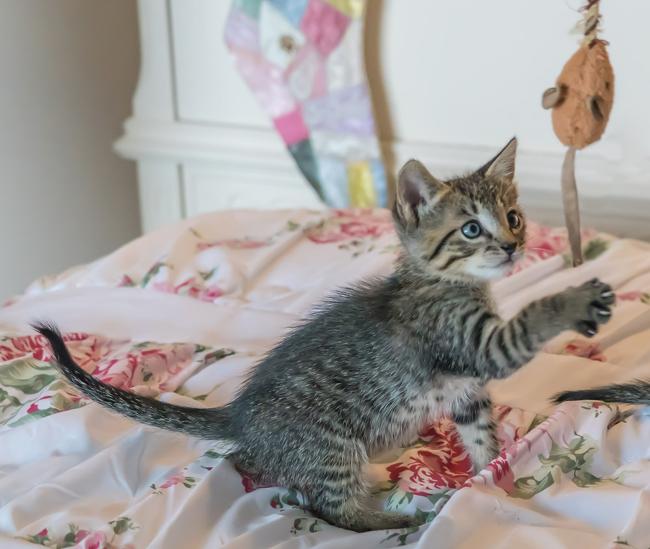 jouet pour chaton